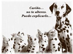 Derecho de visitas para mis perros y pension compensatoria